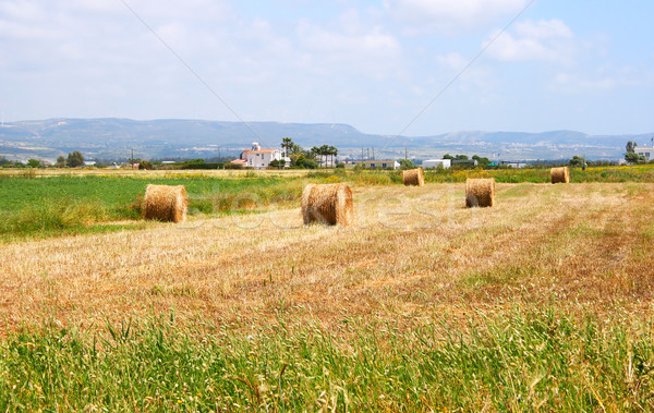 Кипр деревне области дома дерево трава Сток-фото © ruzanna