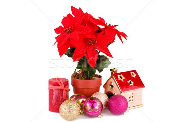 Holly berry flowers and Christmas decoration Stock photo © ruzanna