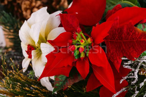 Bogyó virágok piros fehér virágok közelkép kép Stock fotó © ruzanna