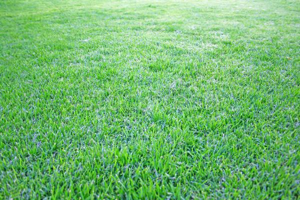 Grre grass Stock photo © ruzanna