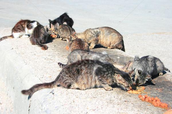 Hajléktalan macskák eszik hús étel fekete Stock fotó © ruzanna