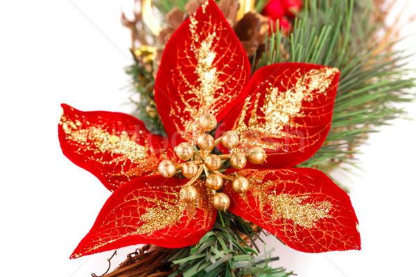 Holly berry flower and Christmas decoration Stock photo © ruzanna