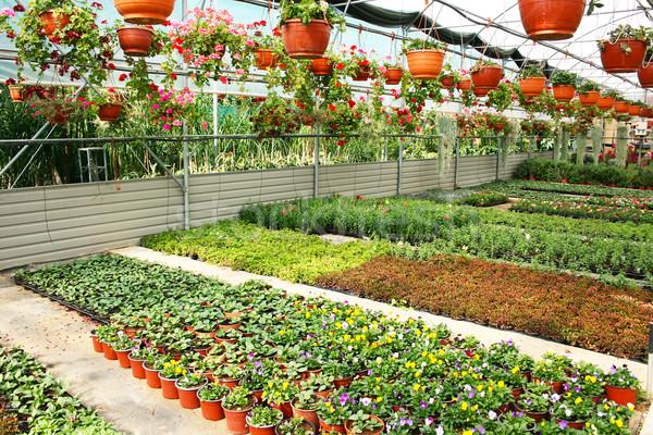 Plantage huis kleurrijk bloemen Cyprus natuur Stockfoto © ruzanna