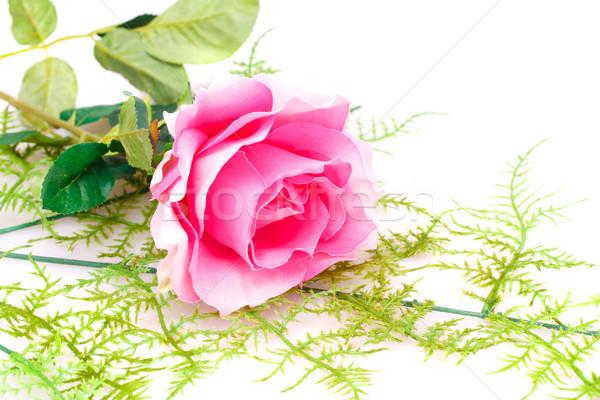 Pink rose Stock photo © ruzanna