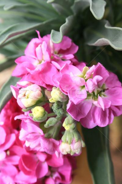Pink flower Stock photo © ruzanna