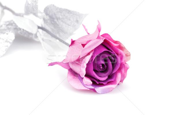 Rózsaszín rózsa izolált fehér rózsa szépség levelek Stock fotó © ruzanna