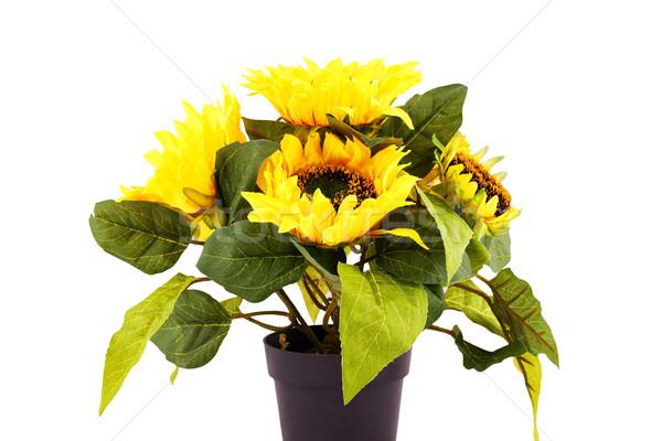 ストックフォト: ひまわり · 花瓶 · 孤立した · 白 · 花 · 自然