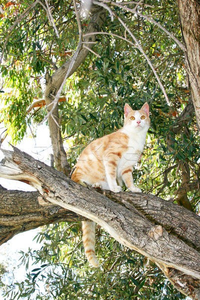 Cat on the tree Stock photo © ruzanna