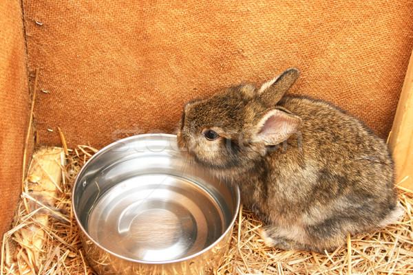 Young rabbit Stock photo © ruzanna