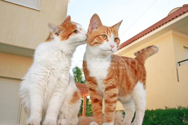 Cats family Stock photo © ruzanna
