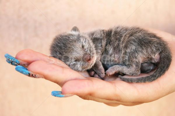Kitten Stock photo © ruzanna