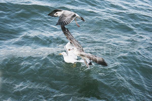 Sirályok tó természet kék utazás hullám Stock fotó © ruzanna