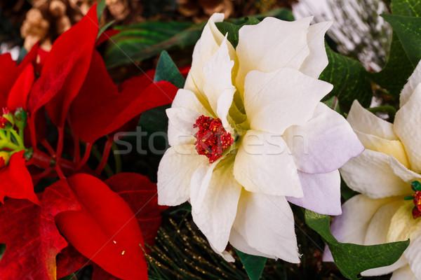 Holly berry flowers Stock photo © ruzanna