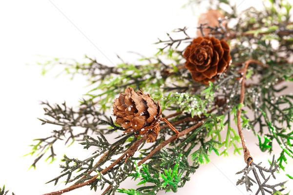 Christmas tree branch Stock photo © ruzanna