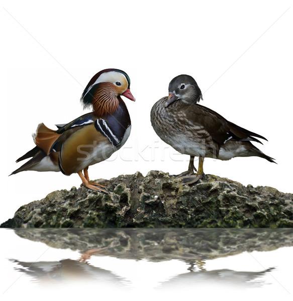 Male And Female Mandarin Ducks Stock photo © saddako2