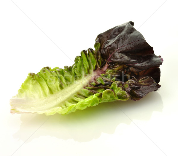 red lettuce leaf  Stock photo © saddako2