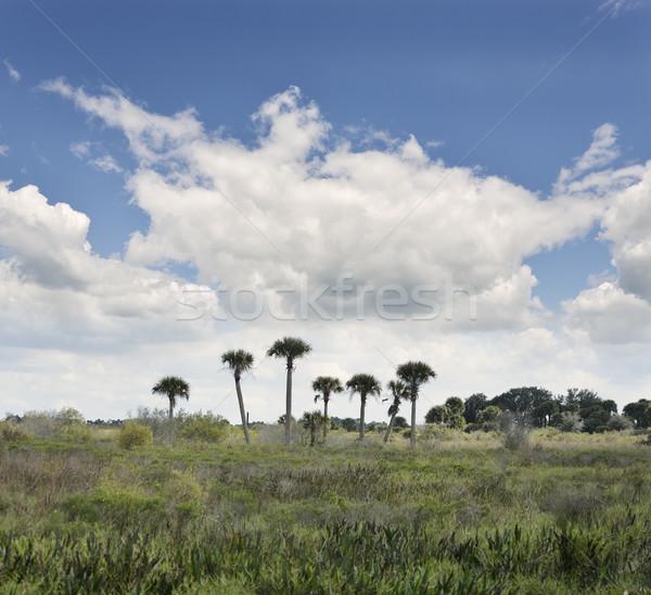 Florida Wetlands Stock photo © saddako2