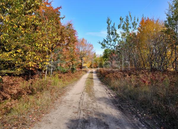rural road and autumn forest Stock photo © saddako2