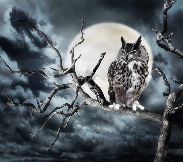 Owl On A Tree At Night Stock photo © saddako2