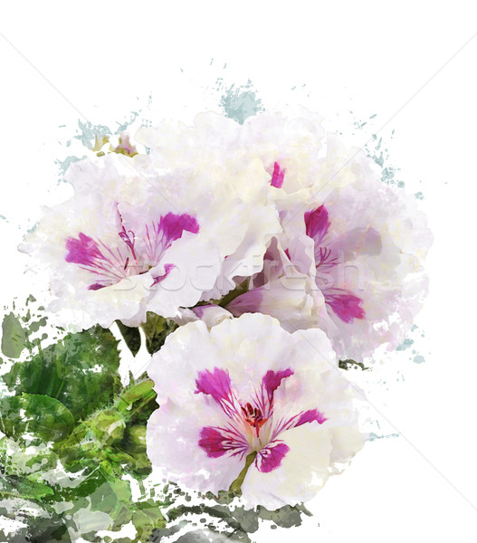 Watercolor Image Of Geranium Flowers Stock photo © saddako2
