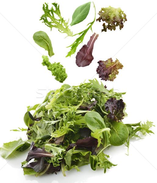 Salad Leaves Stock photo © saddako2