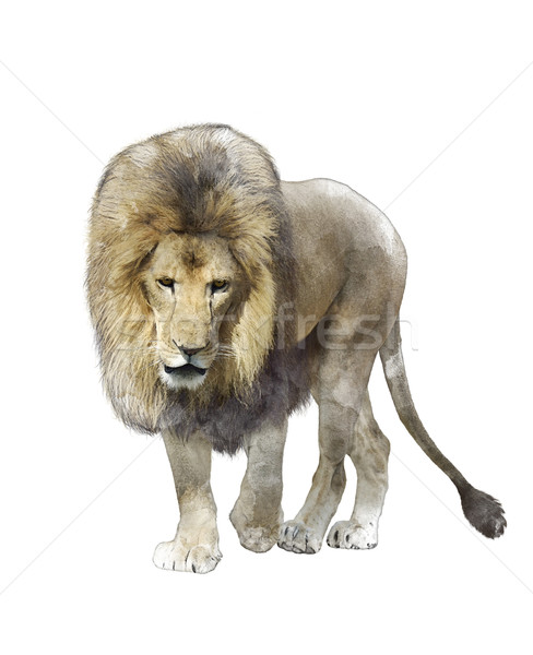 Stock photo: Watercolor Image Of  Walking Lion