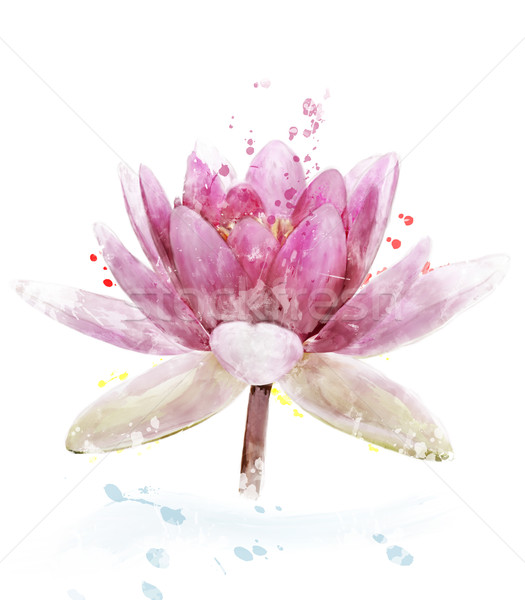 Watercolor Image Of Pink Waterlily Flower Stock photo © saddako2