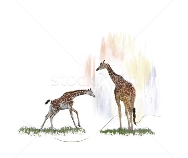 Foto stock: Dois · girafas · aquarela · digital · pintura · pele