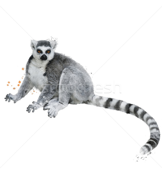 Stock photo: Watercolor Image Of Ring-tailed Lemur