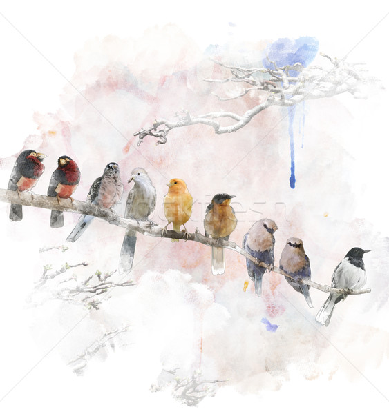 Watercolor Image Of Perching Birds Stock photo © saddako2
