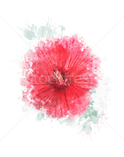 Stock photo: Watercolor Image Of Hibiscus Flower