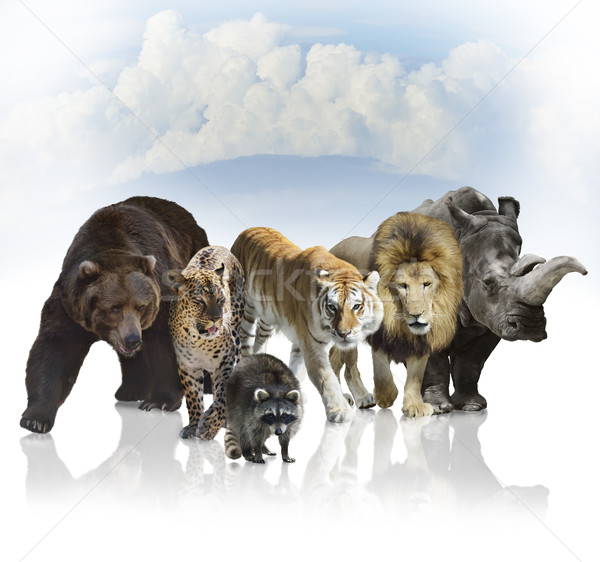 Wild Mammals Stock photo © saddako2
