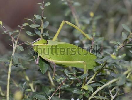 Blad bug omhoog shot natuur groene Stockfoto © saddako2
