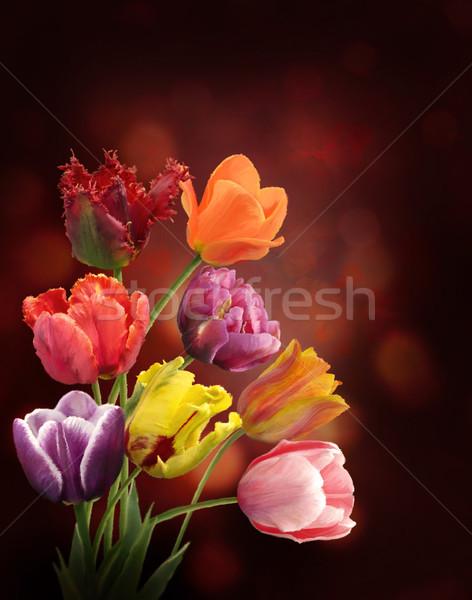 Lale Karanlık Dijital Boyama Lâle çiçekler Stok Fotoğraf