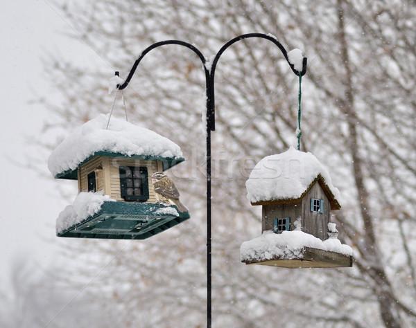 bird feeders in the winter park Stock photo © saddako2