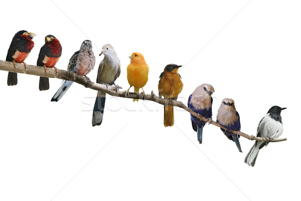 Birds Perching Stock photo © saddako2