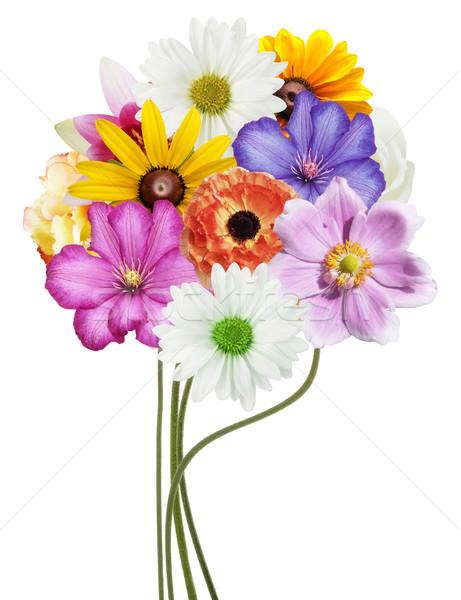 Fleurs ensemble isolé blanche fleur nature Photo stock © saddako2