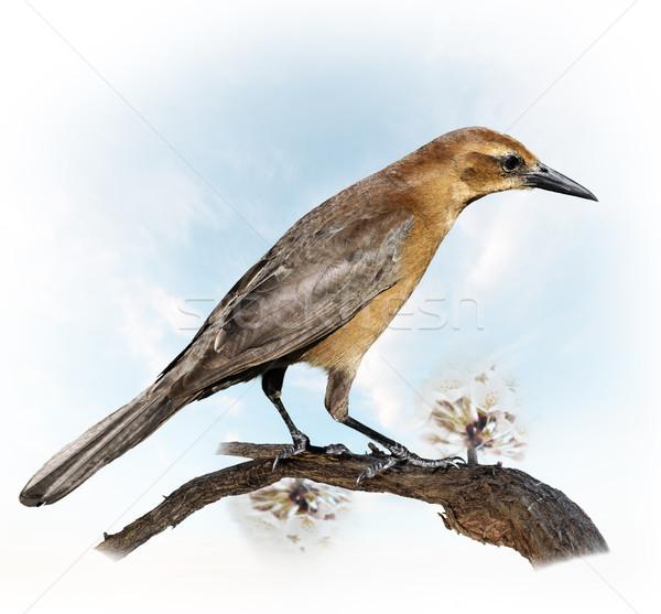 Bird Perching Stock photo © saddako2