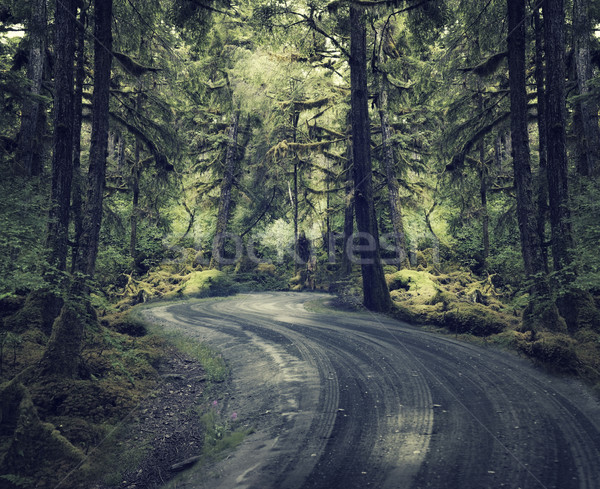 Rain Forest With A Dirt Road Stock photo © saddako2