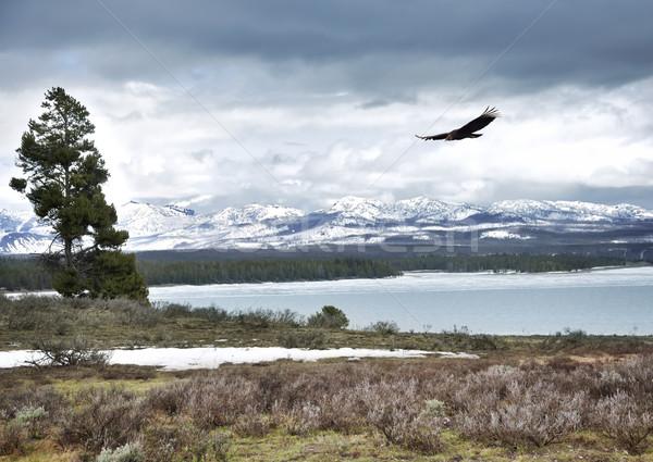 High Mountain Landscape Stock photo © saddako2