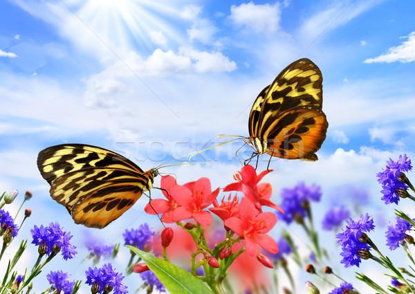 бабочки цветы два красивой тигр Сток-фото © saddako2