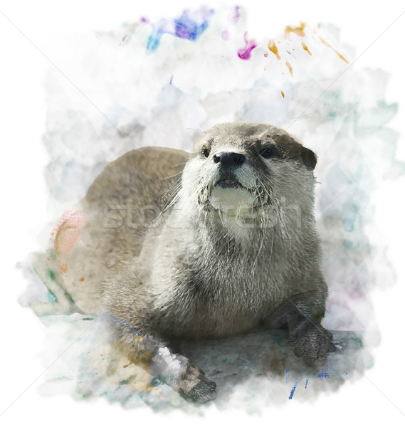 Stock photo: Watercolor Otter Portrait