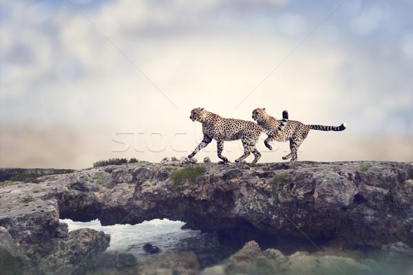 Deux courir haut Rock eau rivière Photo stock © saddako2