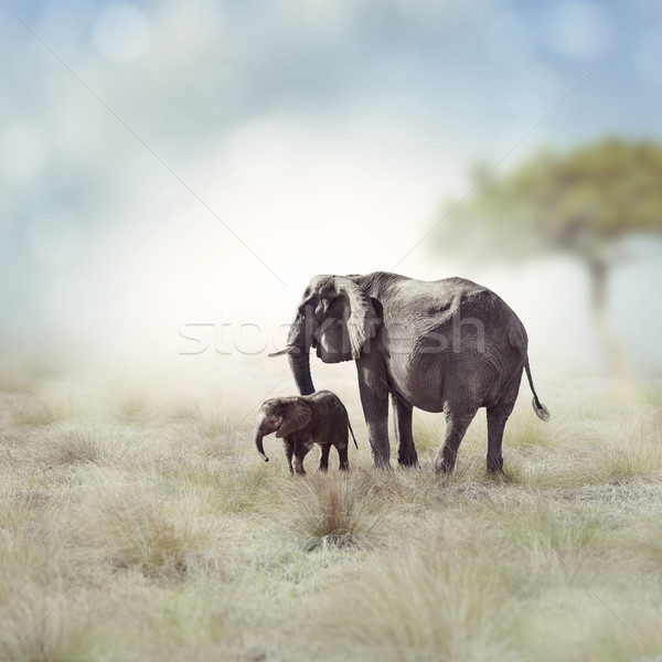 Elephants Stock photo © saddako2