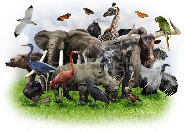 Animals Collage Stock photo © saddako2