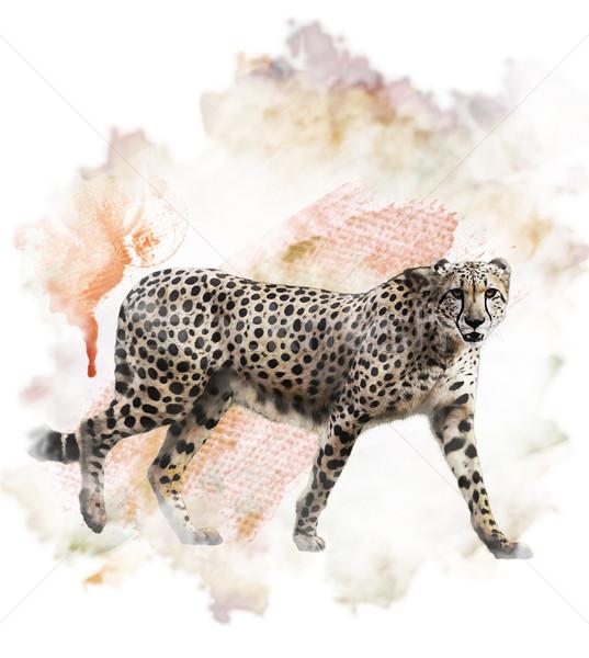 Watercolor Image Of Cheetah Stock photo © saddako2