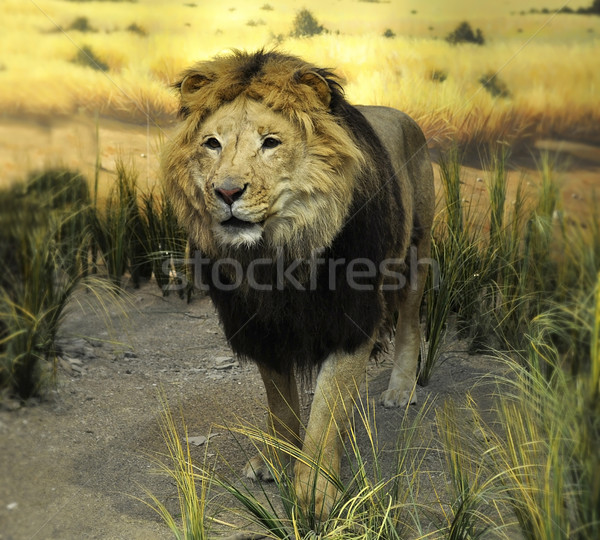 stuffed lion  Stock photo © saddako2