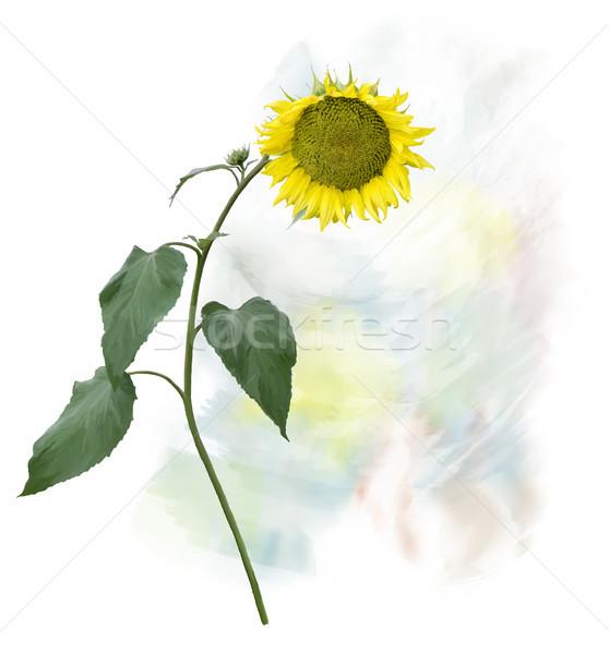 Suluboya Resim Ayçiçeği Dijital Boyama Kök Stok Fotoğraf