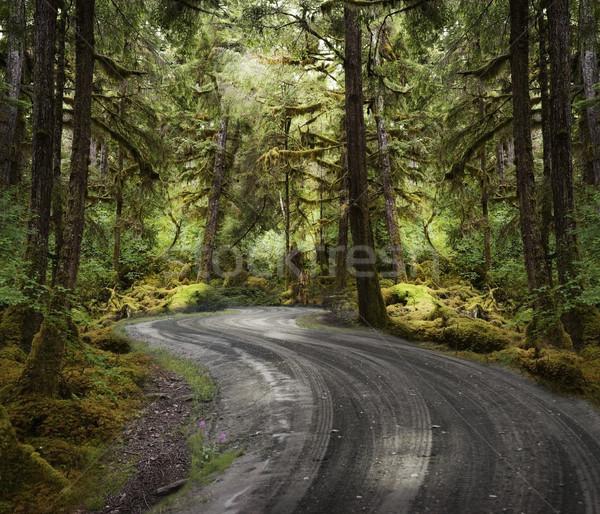 Regenwoud onverharde weg kleurrijk weg bos landschap Stockfoto © saddako2