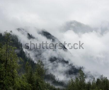 Mgły góry sosny drzew drzewo lasu Zdjęcia stock © saddako2